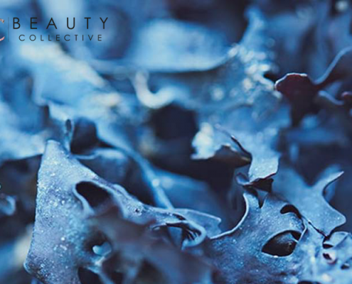 Beauty Collective - marine ingredients